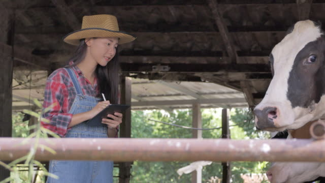 Asian cowgirl video